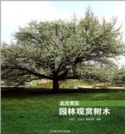 Common Ornamental trees in the North China