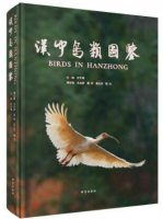 Birds in Hanzhong