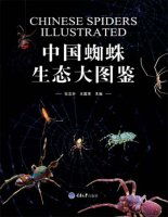 Chinese Spiders Illustrated