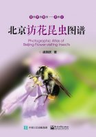 Photographic Altals of Beijing Flower-visiting Insects