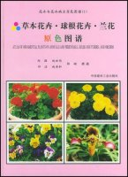 Atlas Of Ornamental Plants On Annuals And Perennials Bulbs And